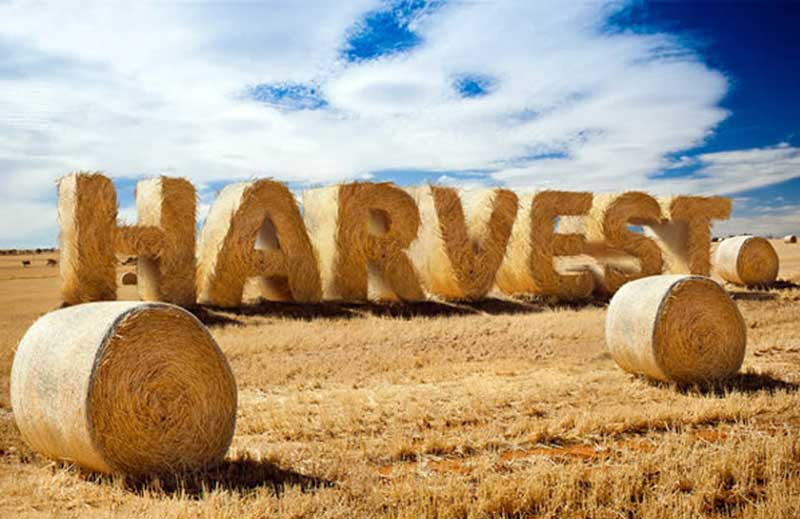 How-to-Create-Stylized-Hay-Bale-Typography-in-Adobe-Photoshop
