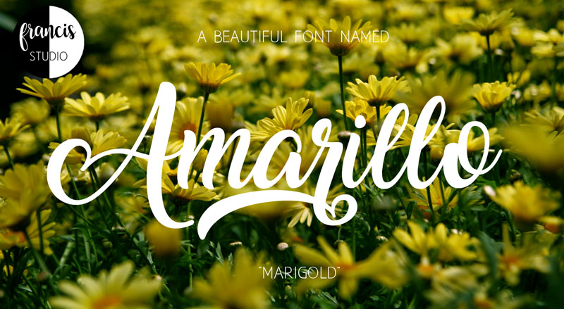 Free-Amarillo-Sophisticated-Script-Font-For-Graphic-Artists