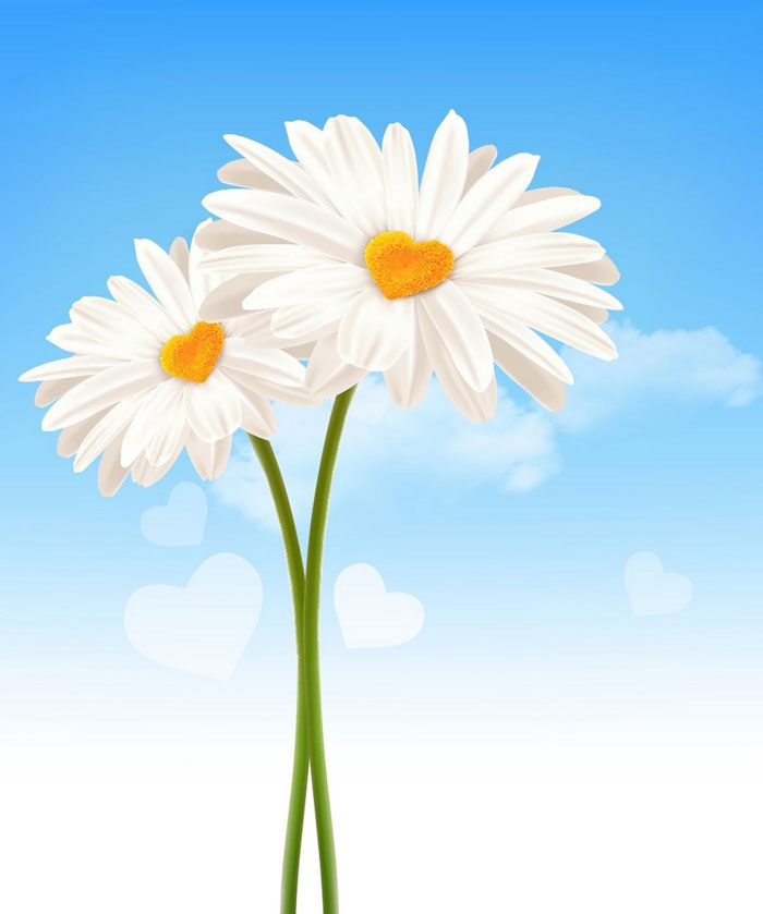 How-to-Draw-Heart-Shaped-Daisies-in-Adobe-Illustrator